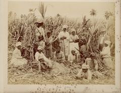 Sugar_Cutters_Jamaica.JPG